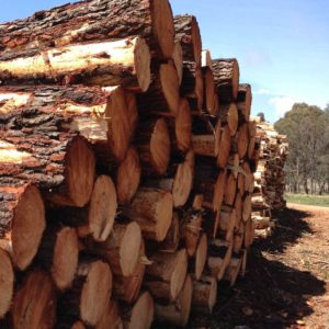 Oberon Economy - Forest & Timber Industry | Visit Oberon