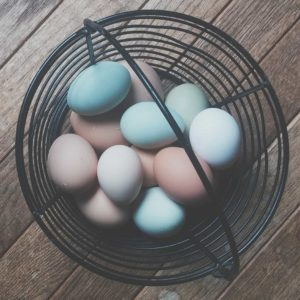 All Your Eggs in One Basket | Visit Oberon