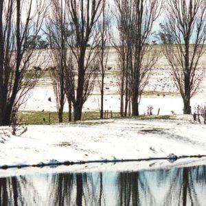 Discover - Winter Poplars | Visit Oberon